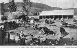 Mr W. Marsh's farm yard on the Paeroa side of Turner's Hill